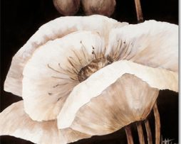 Jettie Roseboom - Amazing Poppies I